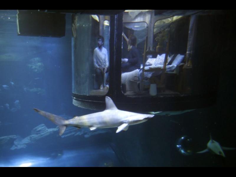 /ВИДЕО/ Нощувка или парижко приключение с акули - картинка 1