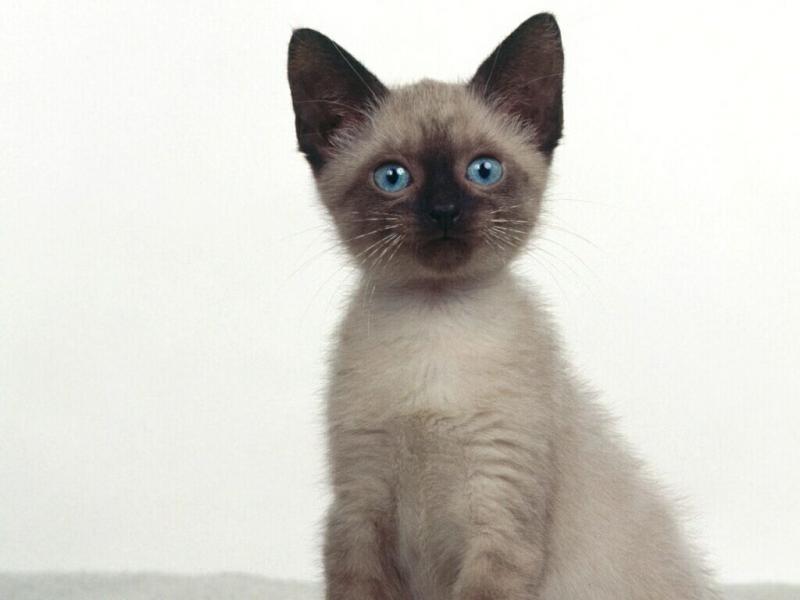Чудо: Котка оцеля след седмица в колет - картинка 1