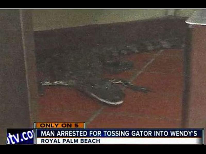 Мъж пусна алигатор в ресторант за бързо хранене - картинка 1