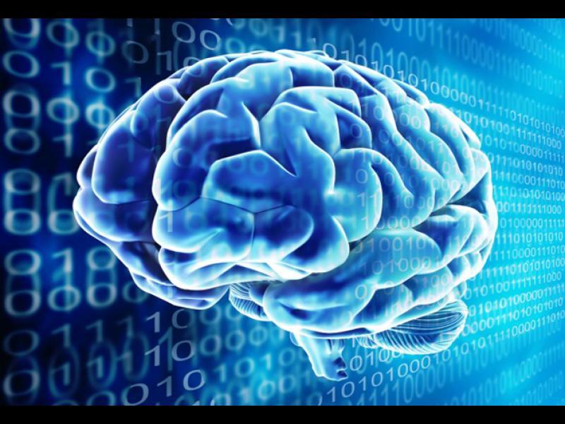Да имаш голям мозък не е много добра новина