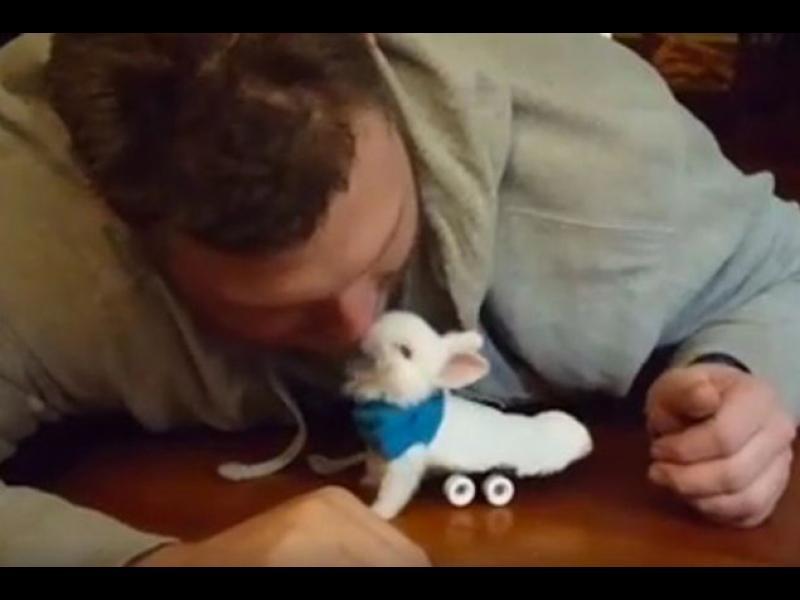 /ВИДЕО/ Не може да не се трогнате от този заек - картинка 1