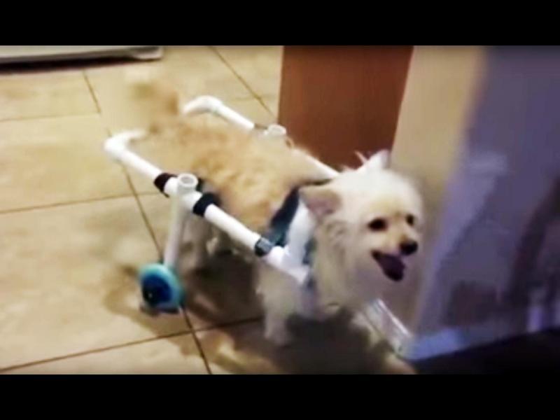 /ВИДЕО/ Кучетата са малки чудеса с лапи!