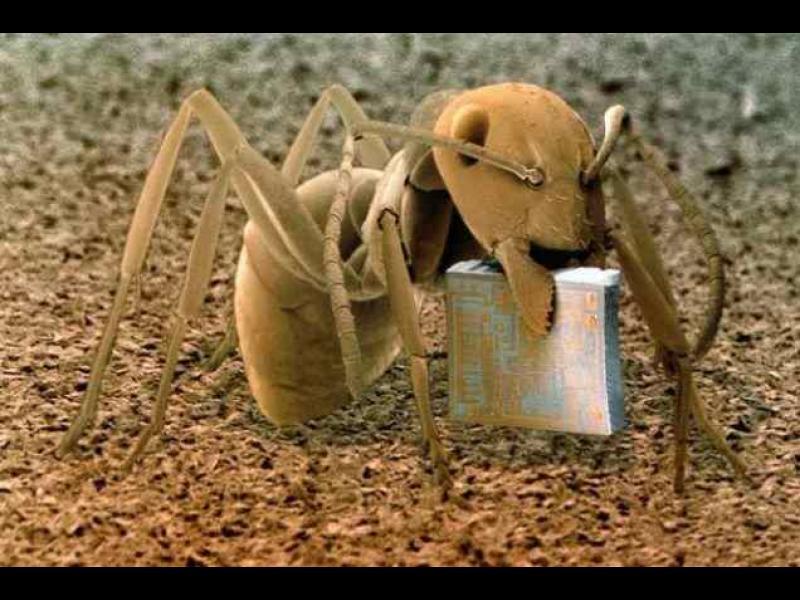 """/СНИМКИ/ """"Невероятният свят"""" под микроскопа"""