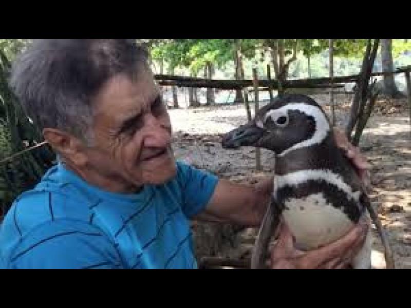 /ВИДЕО/ Пингвин плува по 5000 мили, за да види спасителя си - картинка 1