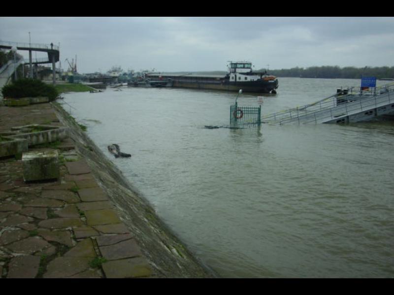 Реална опасност от преливане на река Дунав - картинка 1