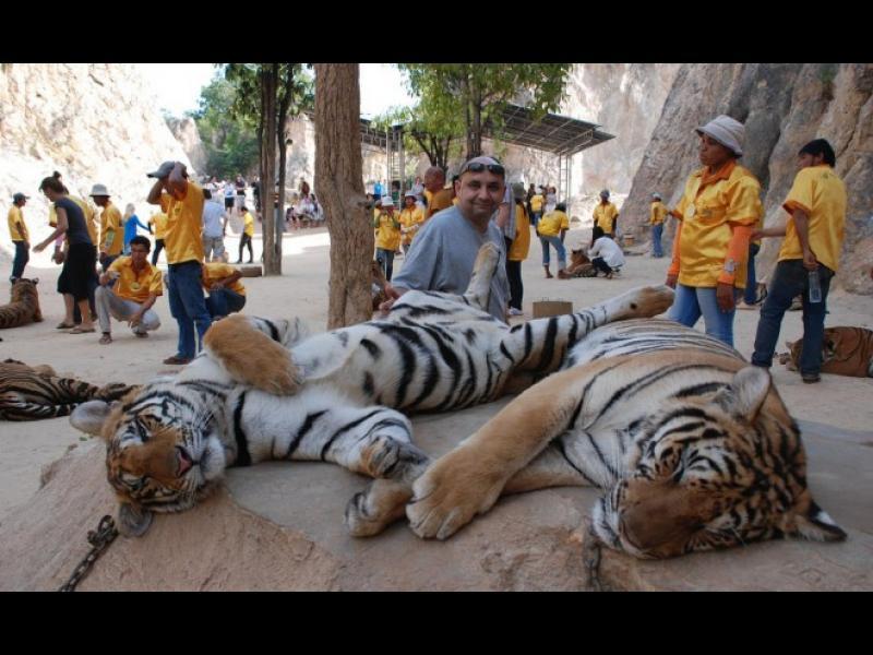 """/СНИМКИ/ Тайландският """"храм"""" на тигрите - картинка 1"""