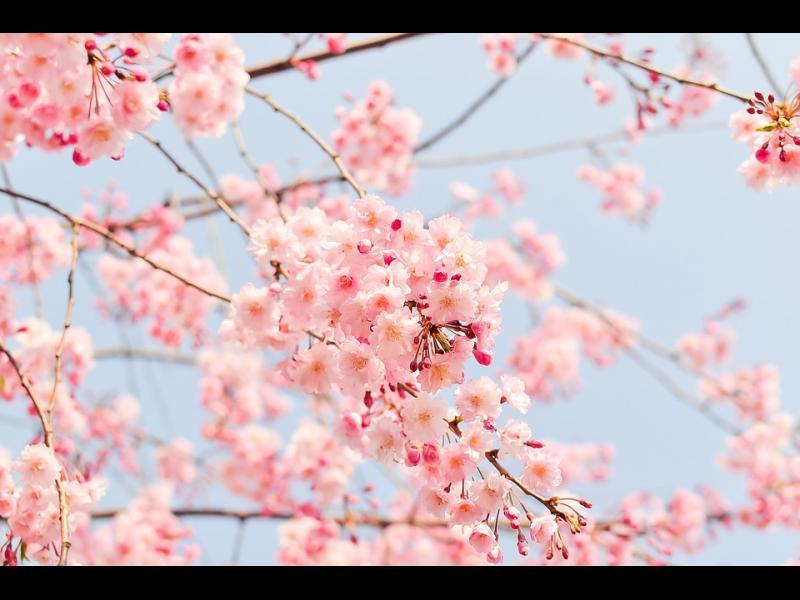 Честита пролет! - картинка 1