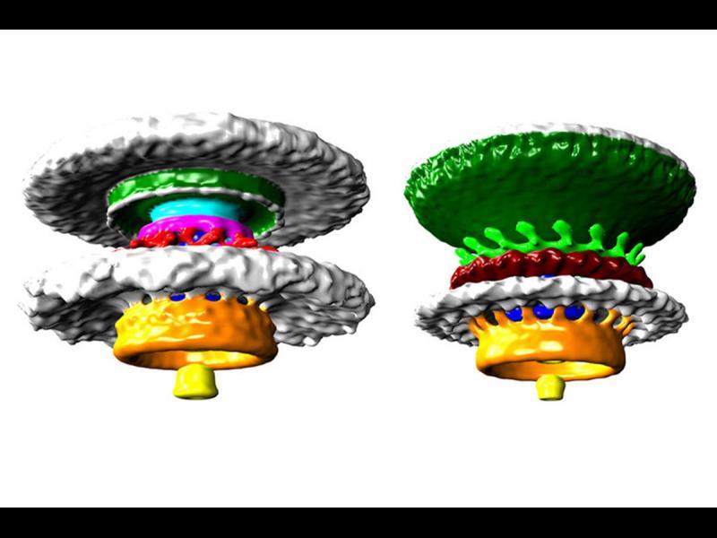 """/СНИМКИ/ """"Загадъчните"""" естествени биодвигатели - картинка 1"""