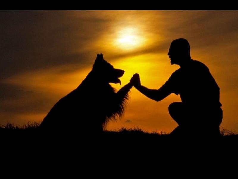 /СНИМКИ/ Завещанието на едно достойно куче