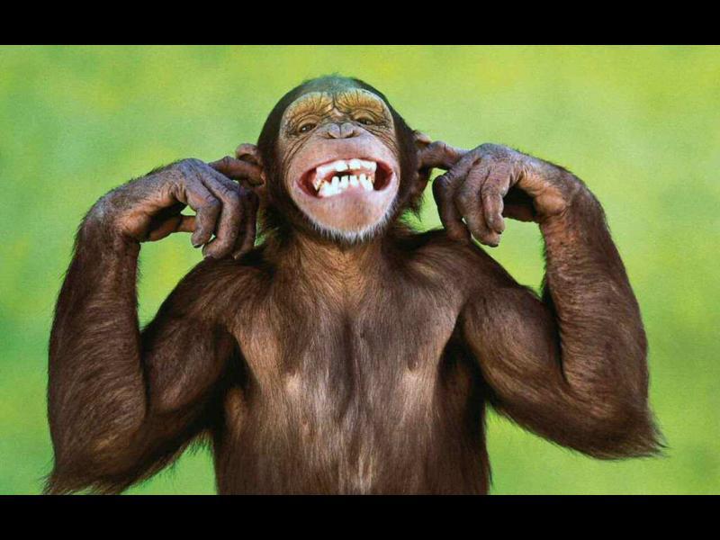 /ВИДЕО/ Маймунджилъците на една маймуна - картинка 1