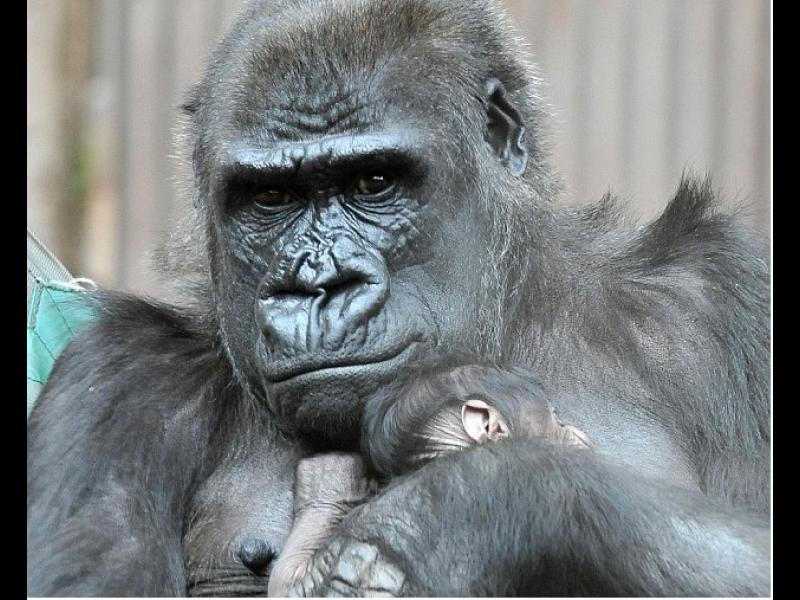 Изненадващ обрат! Неочаквано бебе в зоопарка (ВИДЕО+СНИМКИ) - картинка 1