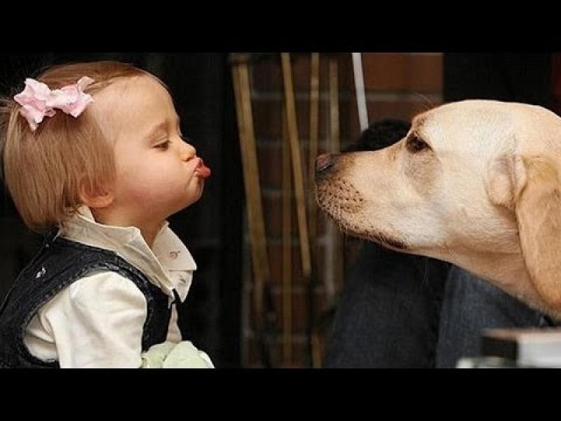 """/СНИМКИ/ Г-жо Фандъкова, ние ще имаме ли """"кучемати""""? - картинка 1"""
