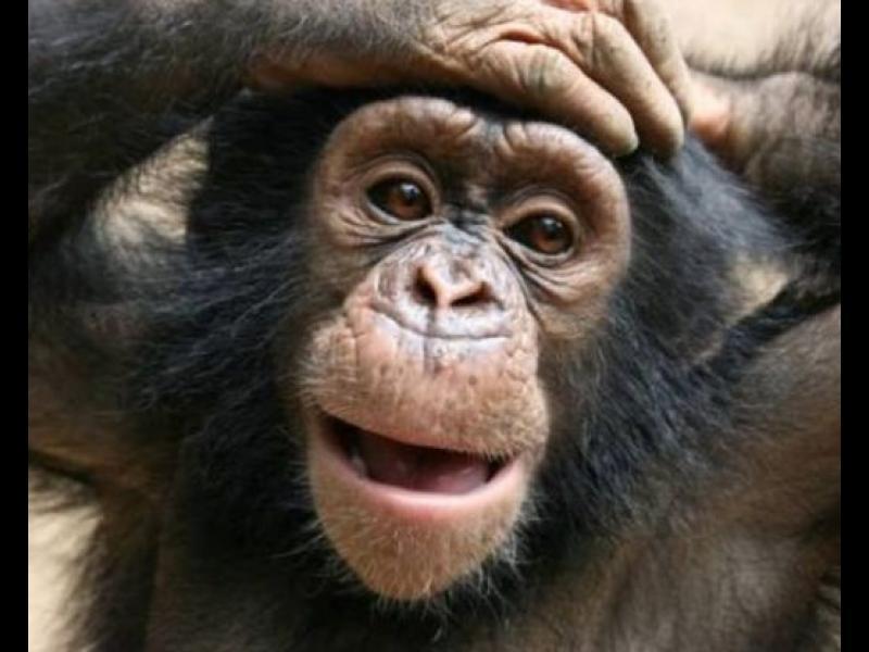 /ВИДЕО/ Учени: Шимпанзетата вероятно вярват в Бог