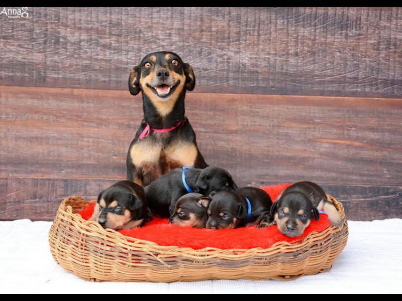 /СНИМКИ/ Можете ли да си представите по-щастлива майка? - картинка 1