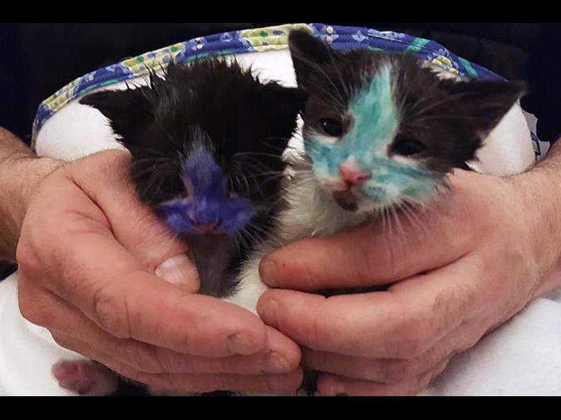 Спасените котета от полицая герой - картинка 1