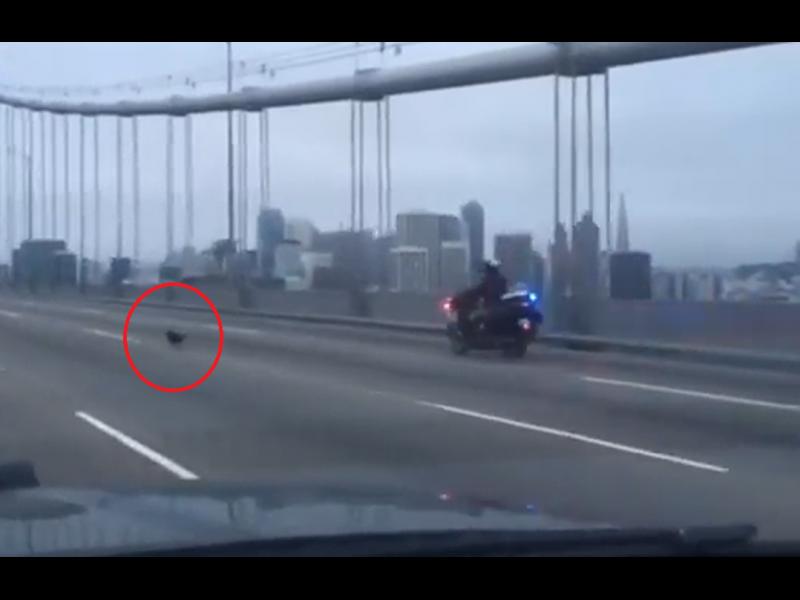 /ВИДЕО/ Гонка между полицаии и куче на натоварен мост - картинка 1