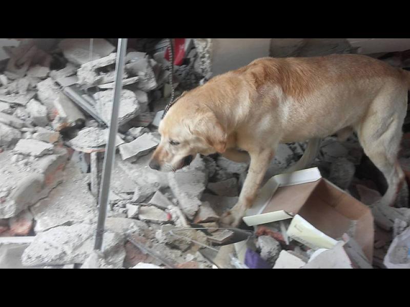 Куче спаси 7 души в Еквадор - картинка 1