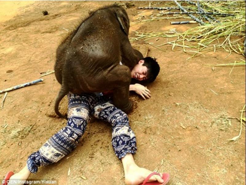 /ВИДЕО/ Ето това е слонска прегръдка! - картинка 3