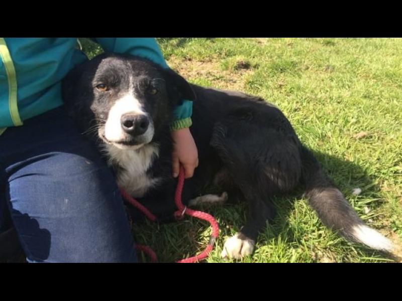/СНИМКИ/ Куче пропътува 240 мили, за да се прибере вкъщи