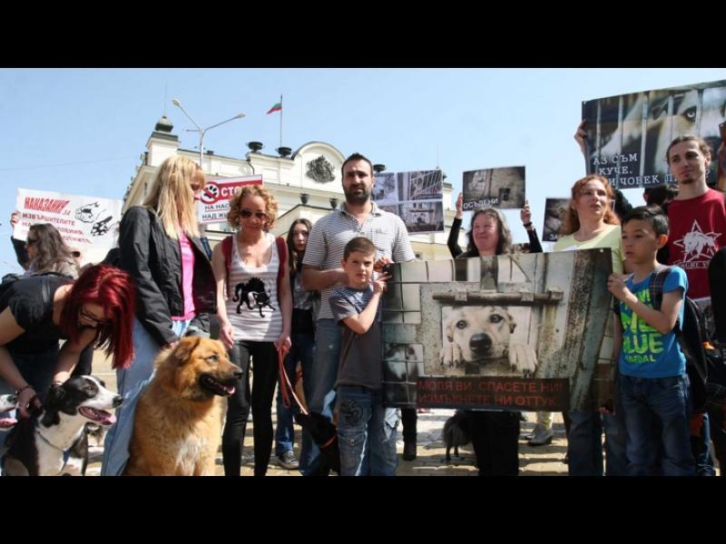 """""""Аз съм с куче - 2"""": Приютите за бездомни животни само гълтат пари - картинка 1"""