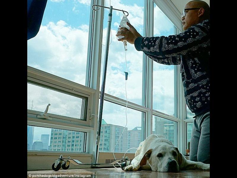 /ВИДЕО+СНИМКИ/ Стопанин се отблагодарява на умиращото си куче - картинка 1