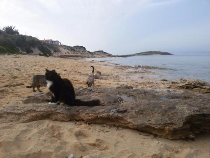 Сардиния: Котешкият плаж все още е топ дестинация! - картинка 4