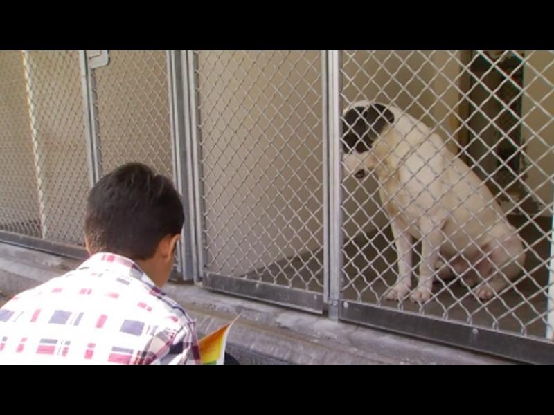 /ВИДЕО+СНИМКИ/ Момченце с аутизъм помага на кучета в приют - картинка 1
