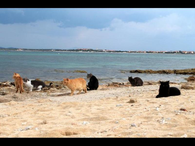 Сардиния: Котешкият плаж се превърна в топ дестинация! - картинка 2