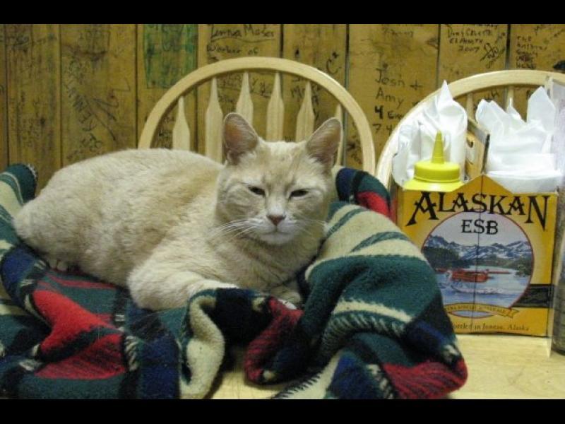 Котката кмет е жива! - картинка 1