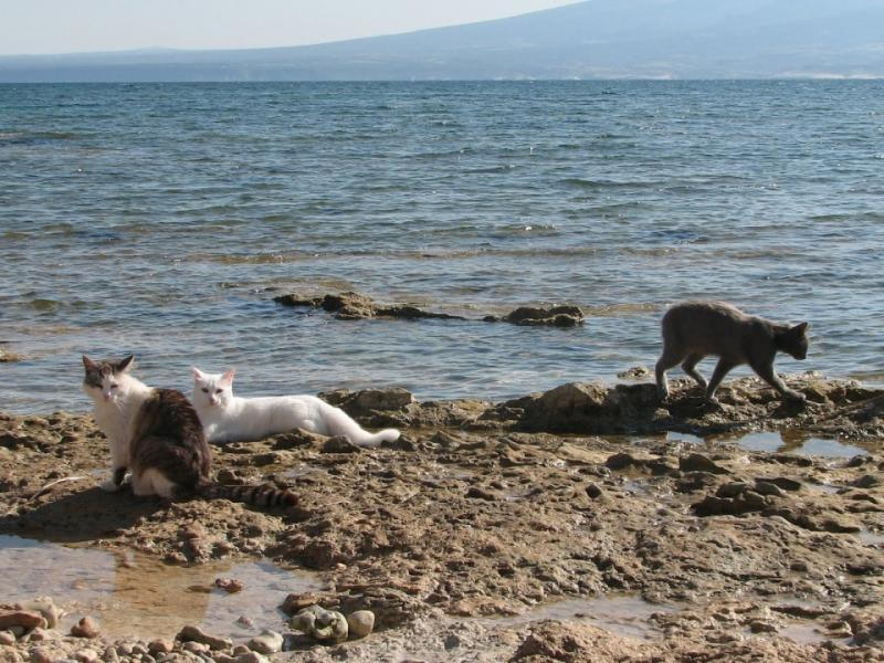 Сардиния: Котешкият плаж все още е топ дестинация! - картинка 5