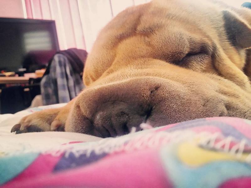 /СНИМКИ/ Пет ценни урока, които може да научите от кучето си