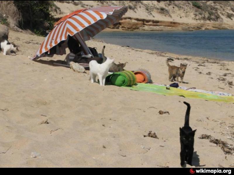 Сардиния: Котешкият плаж все още е топ дестинация! - картинка 3