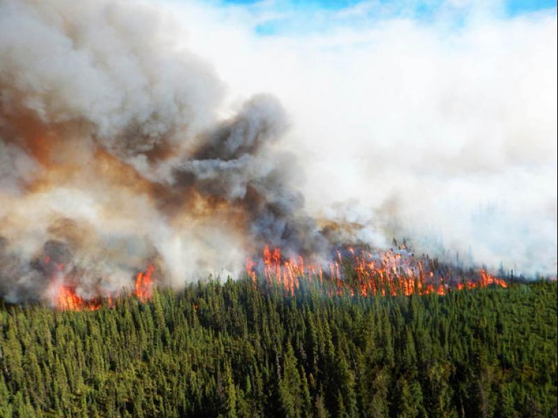 Надежда за овладяване на горски пожар в Канада - картинка 1
