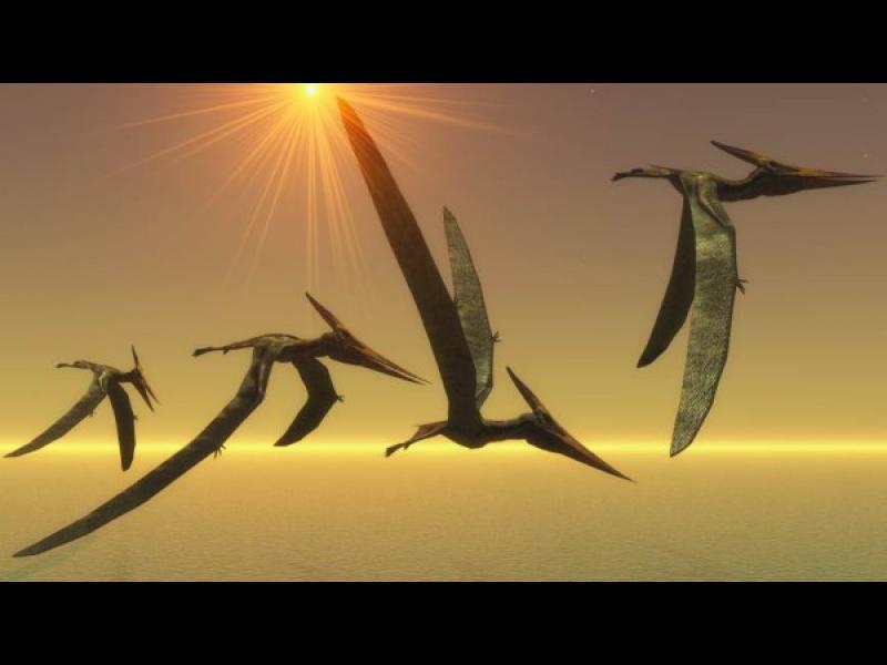 Уникално: Огромна птица е летяла над Антарктида преди 50 млн. година - картинка 1