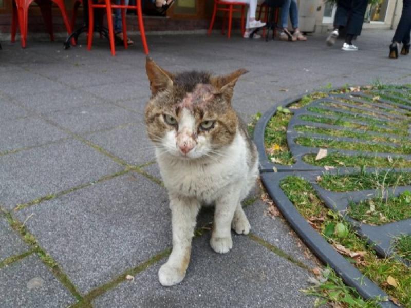 До кога ще продължава насилието над беззащитни животни в България? - картинка 1