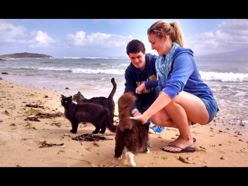 Сардиния: Котешкият плаж все още е топ дестинация!