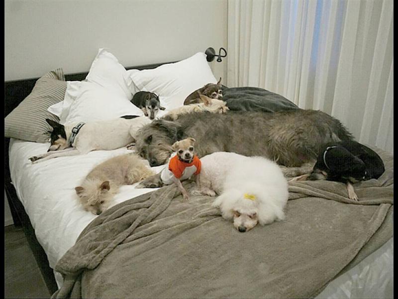 /СНИМКИ/ Да посветиш живота си на възрастни кучета, които нямат шанс за дом
