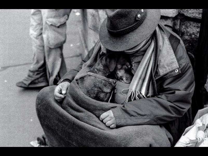 /СНИМКИ/ Кучетата ви обичат, без значение колко пари имате
