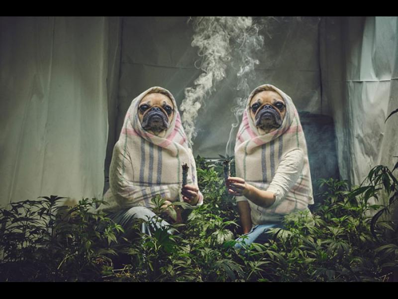Колорадо ще помага на бездомните с пари от данъците за марихуана - картинка 1