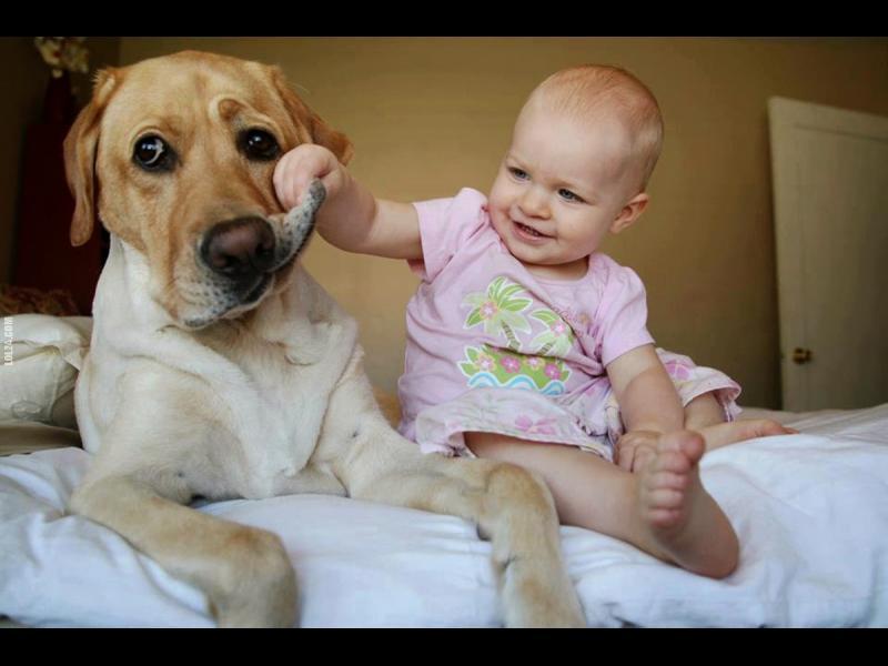 Куче вкъщи за здрави малчовци