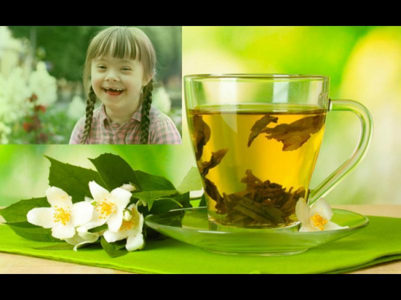 Зеленият чай помага при синдром на Даун?