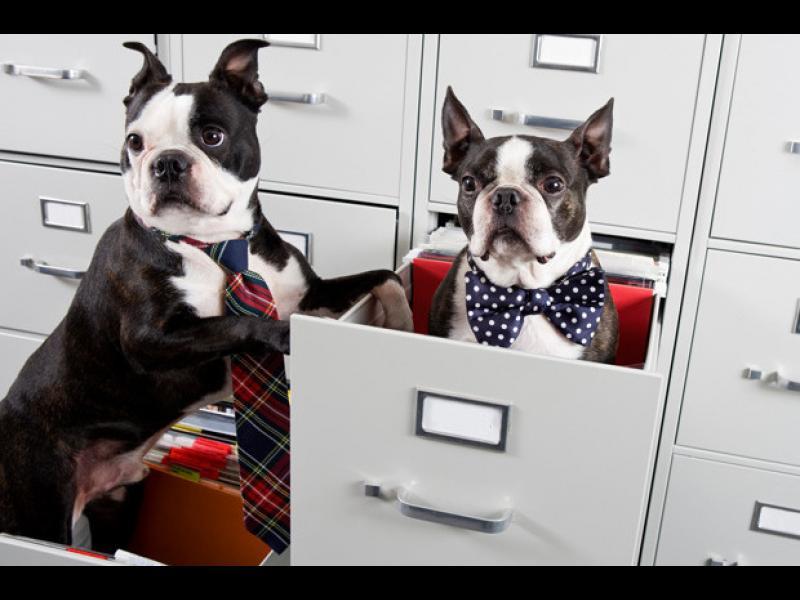 Денят, в който може да заведете домашният си любимец на работното място - картинка 2