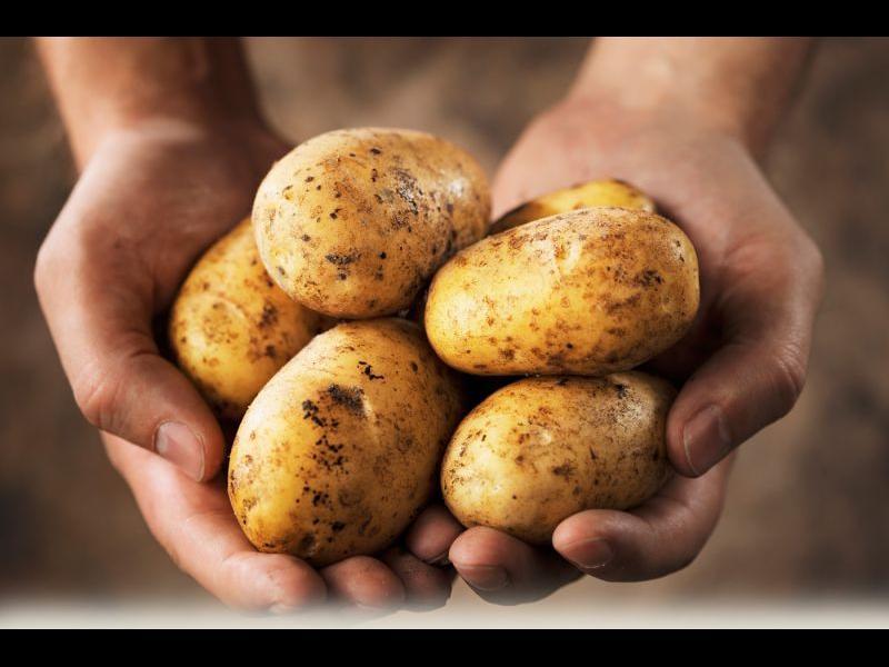 Консумацията на картофи крие рискове - картинка 1