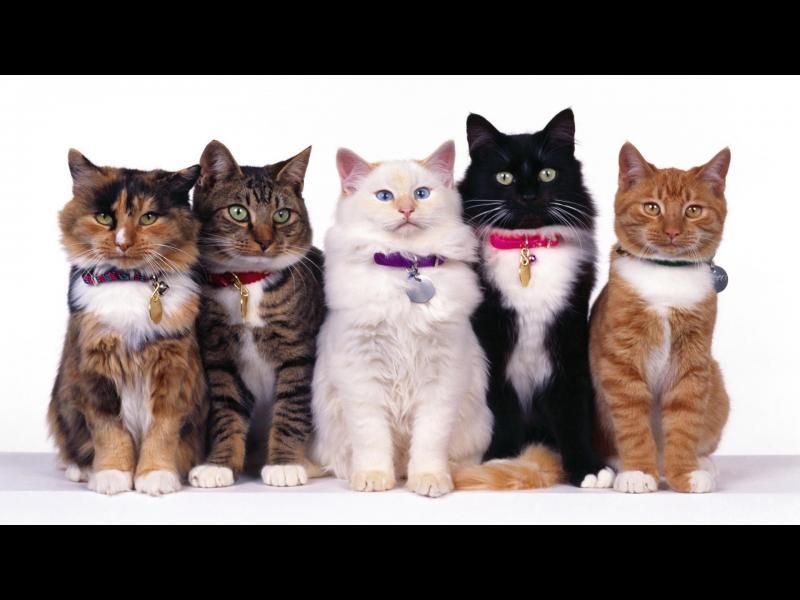5 неща, които не знаете за котките