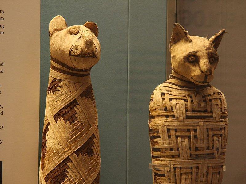 В животинските мумии няма животни!
