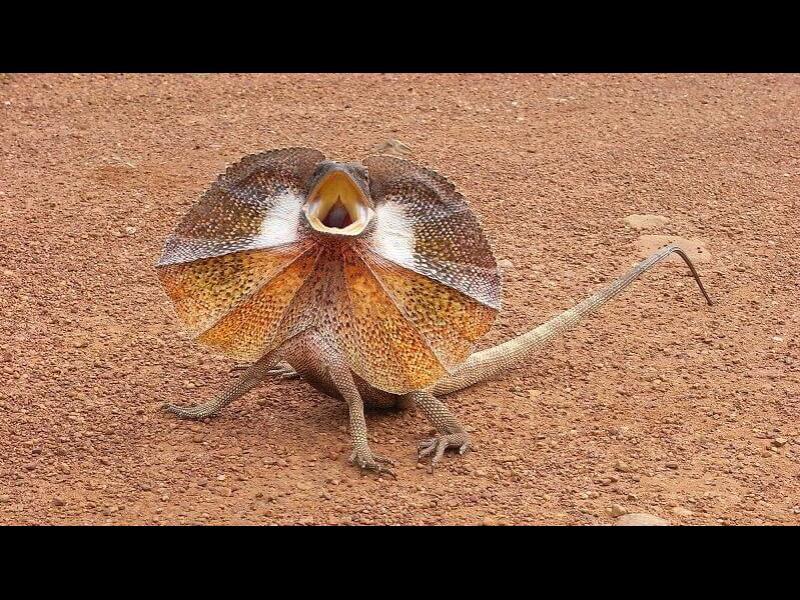 Как да реагираме, когато ни нападне динозавър?