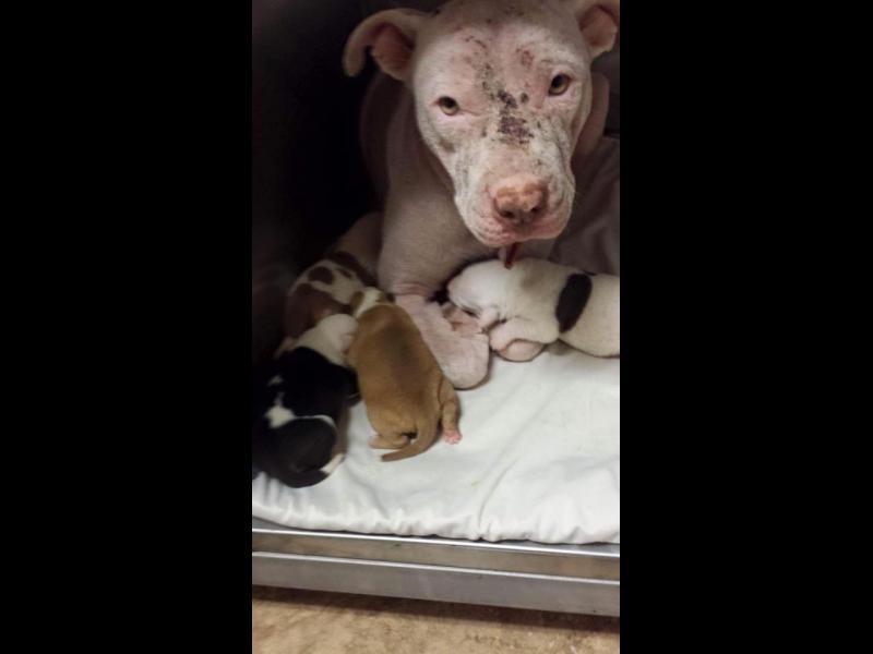 /СНИМКИ/ Кучетата не са вещи, не са и фабрики за бебета!