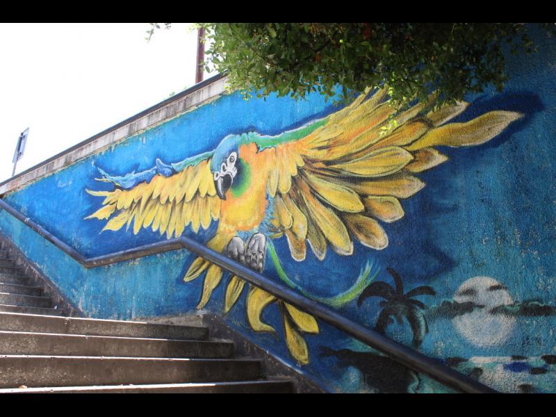 /СНИМКИ/ Уличните стени, като платно за прекрасни творения