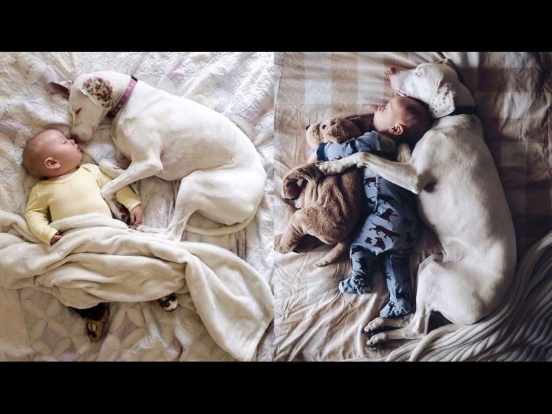 /СНИМКИ/ Спасено куче от улицата обича да спинка с неговото човешко братче