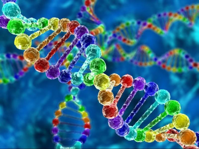 Грешки в ДНК са най-вероятните причини за диабет тип 2 - картинка 2